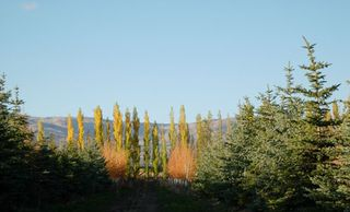 Tuscan-trees