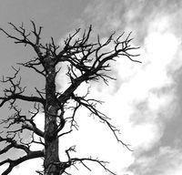 Flor-tree